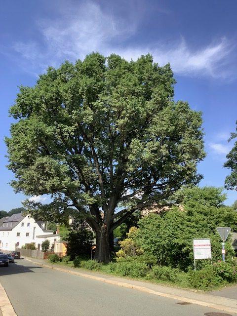 GRÜNE: Anpassungsstrategien und zukunftstaugliche Alternativen gegen zunehmende Hitzeperioden gefragt – Lebensqualität darf nicht auf der Strecke bleiben